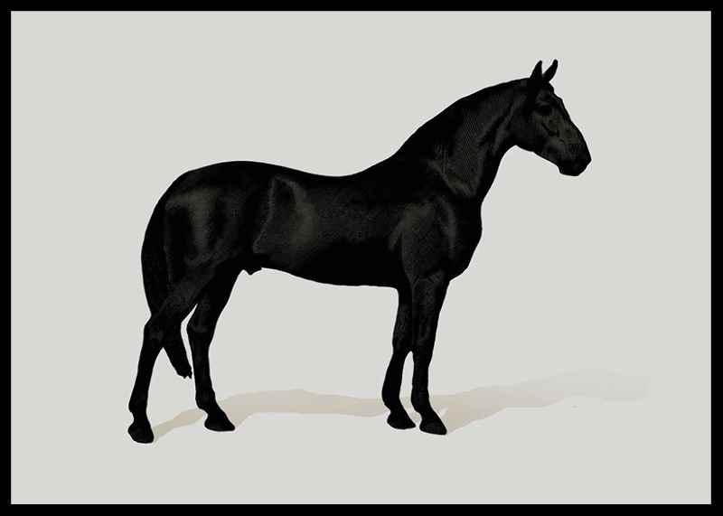 Black Horse Land. Drawing