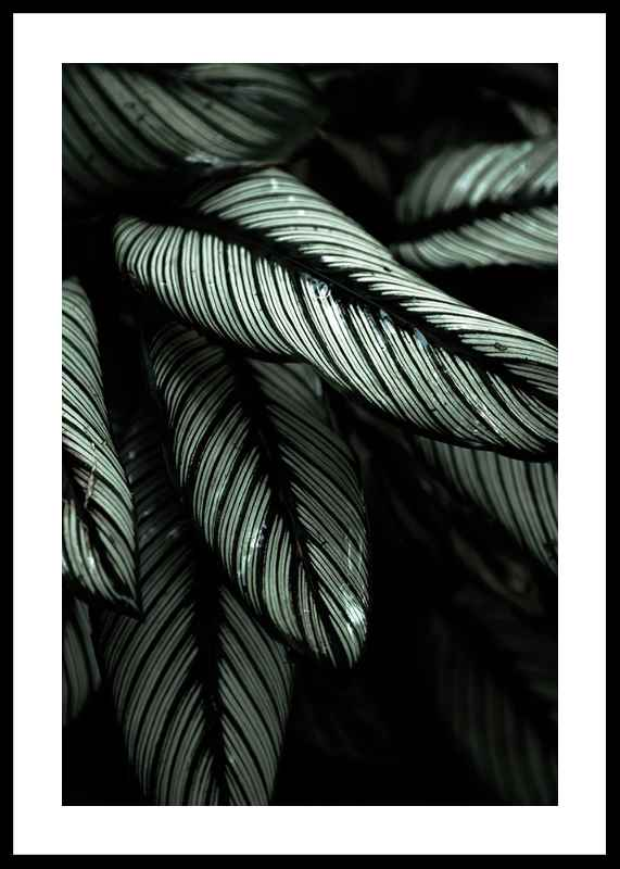 Dark Green No2