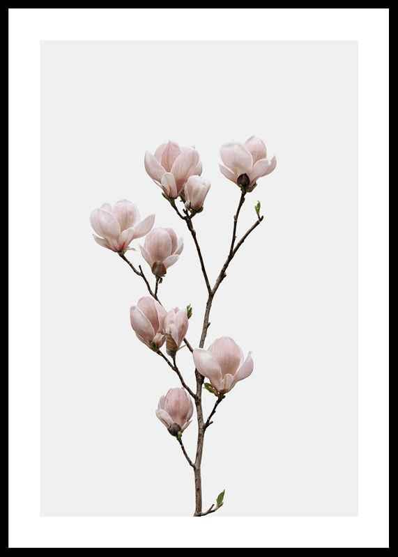 Magnolia Flower-0