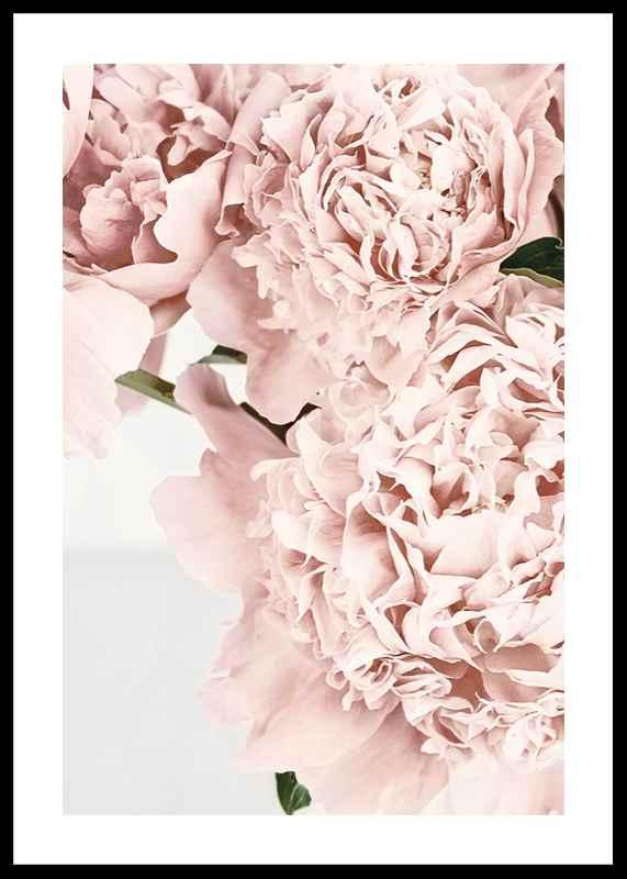 Loving Roses No2