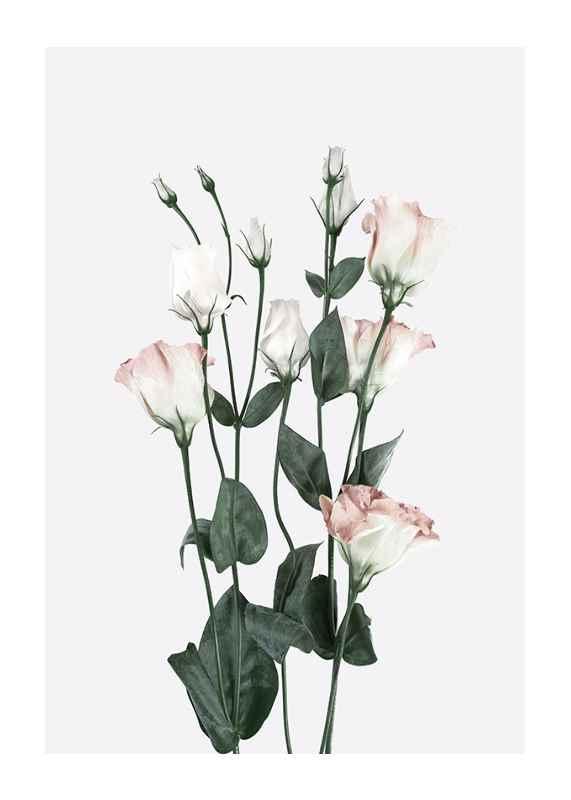 Rose Bouquet No2-1