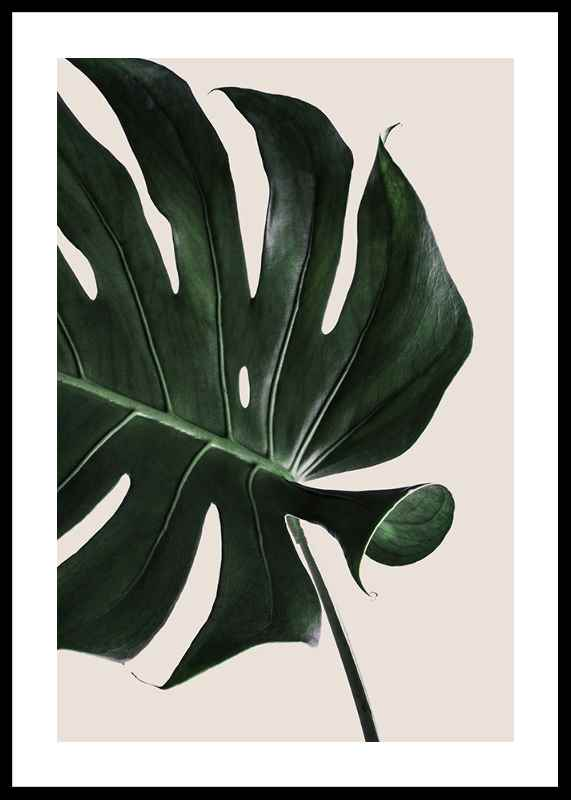 Monstera Two