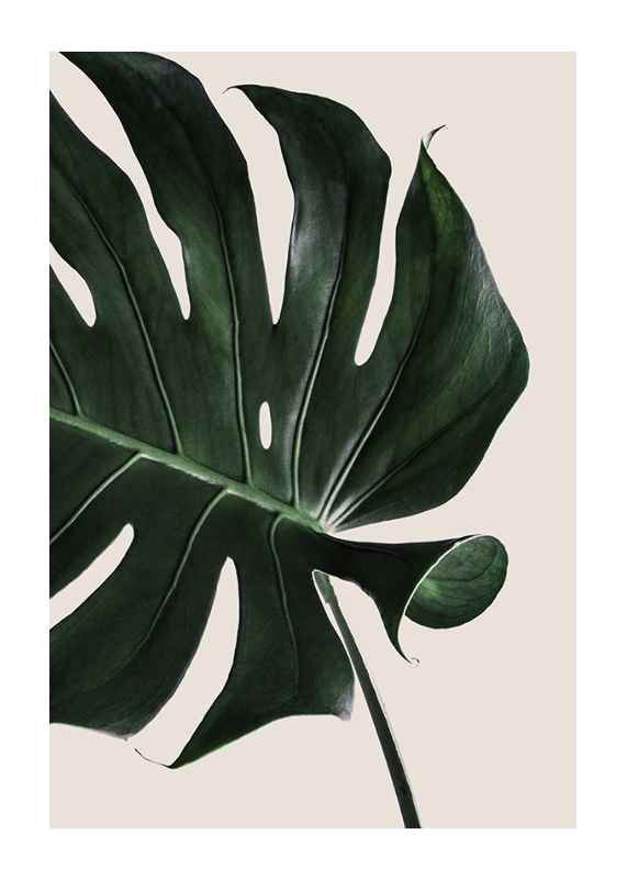 Monstera Two-1
