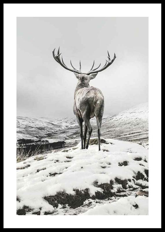 Winter Roe Deer
