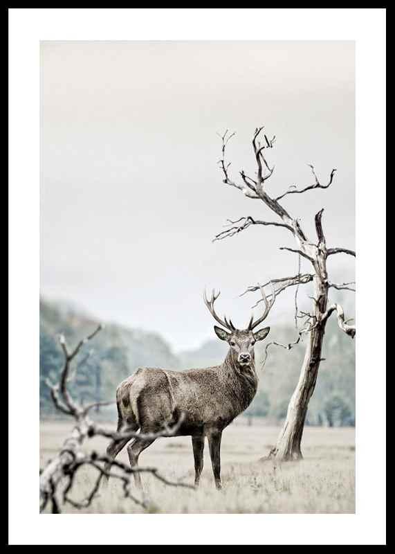 Winter Deer-0