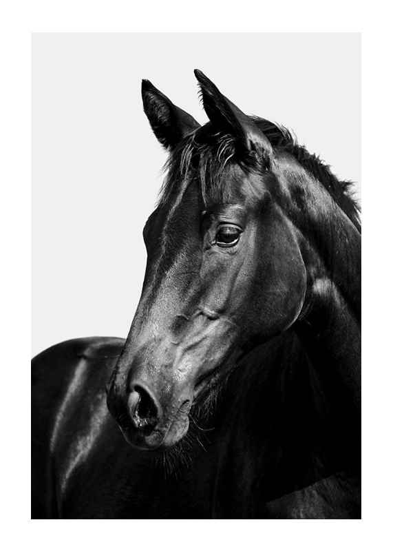 Black Horse-1