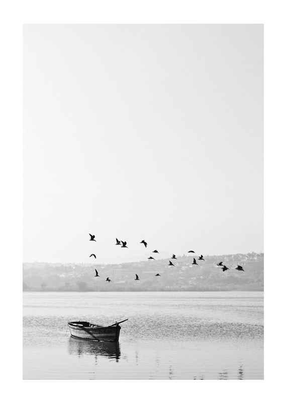 Birds over lake-1