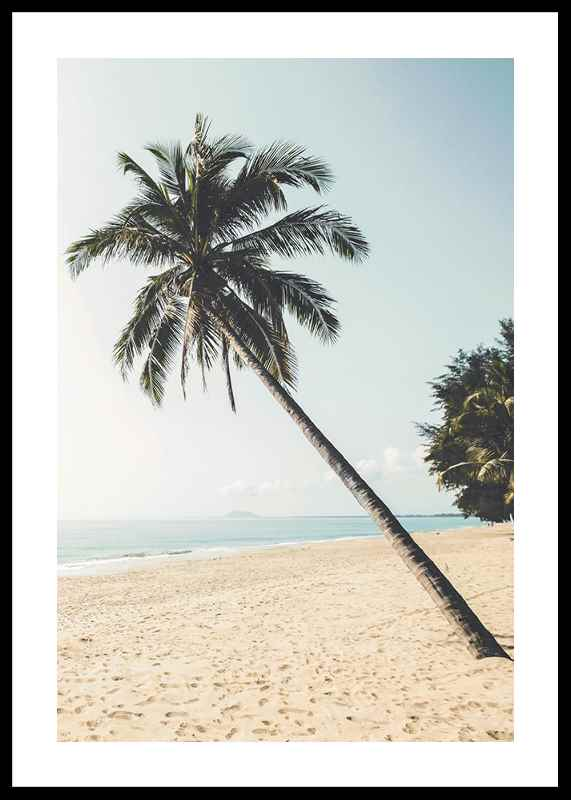 Leaning Palm