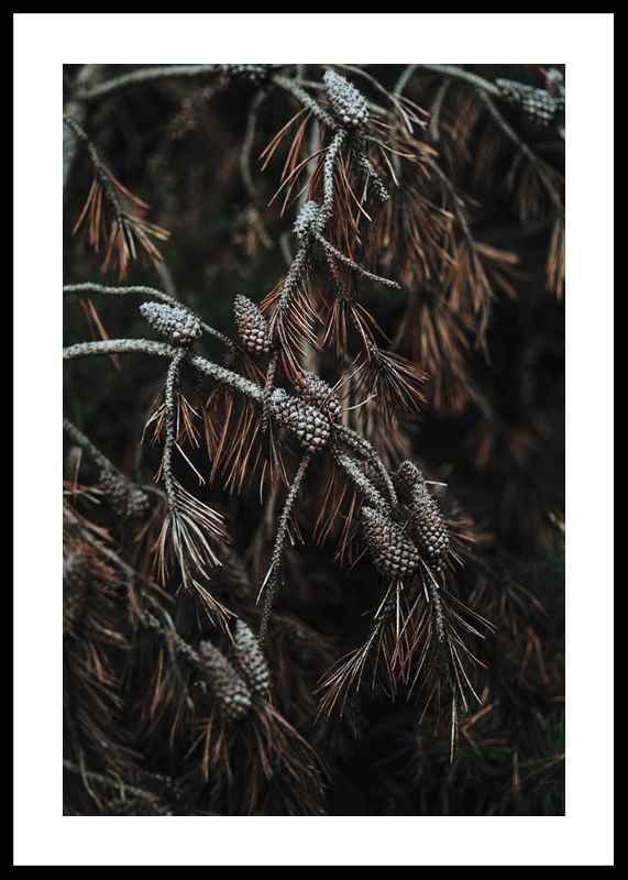Tree Cones-0