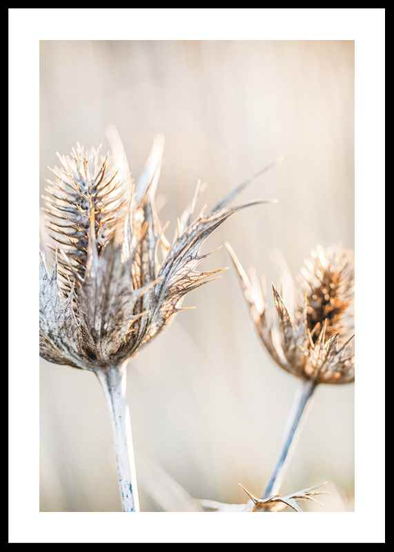 Dried Plants No1-0