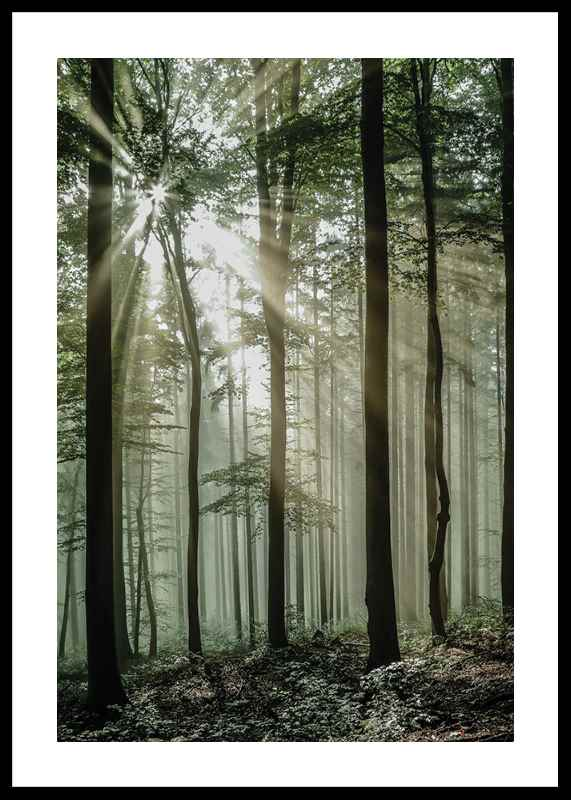 Light Through Trees-0