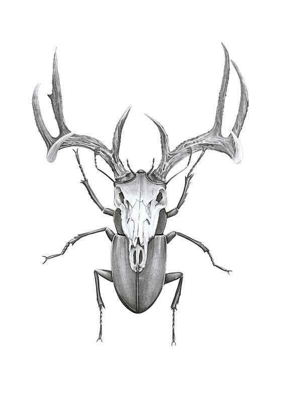Mr stag beetle-1