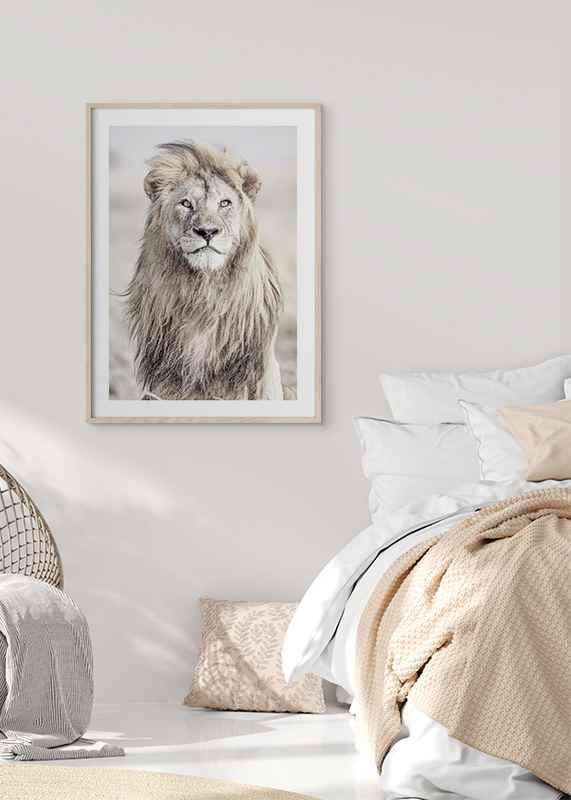 Majestic Lion Color-4