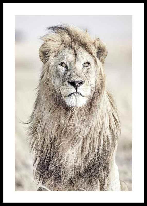 Majestic Lion Color-0