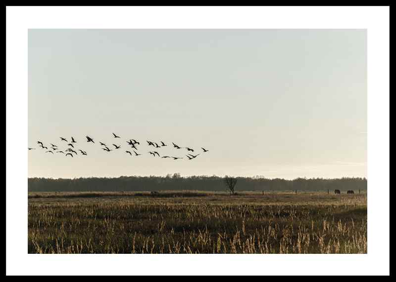 Birds Flyby-0