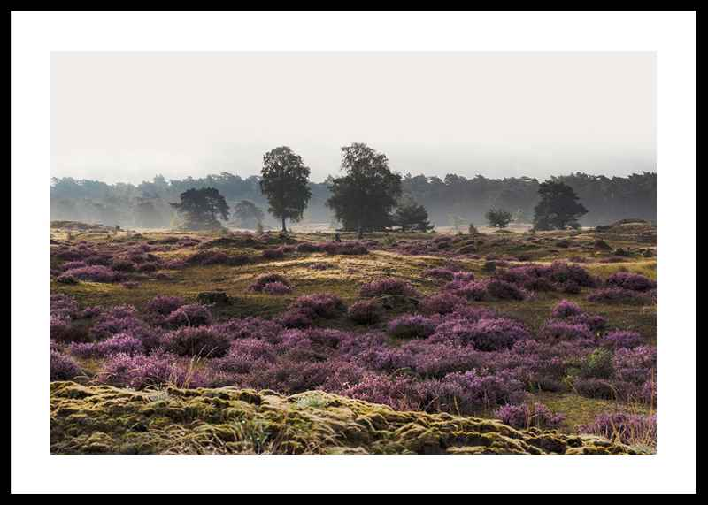 Veluwe Meadow