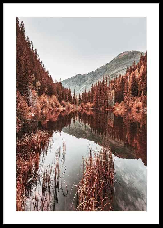 Colorado Forest-0