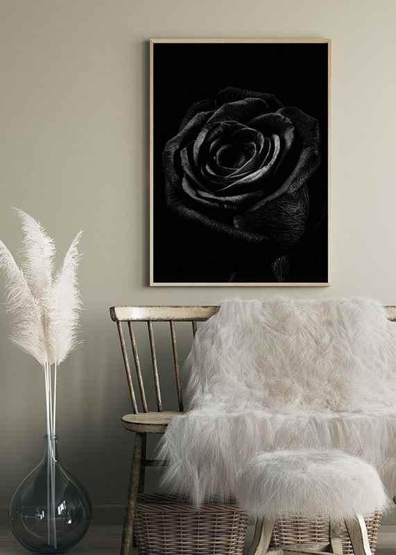 Black Rose-4