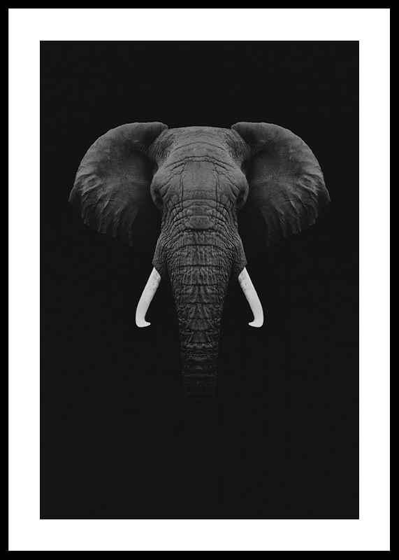Black Elephant-0