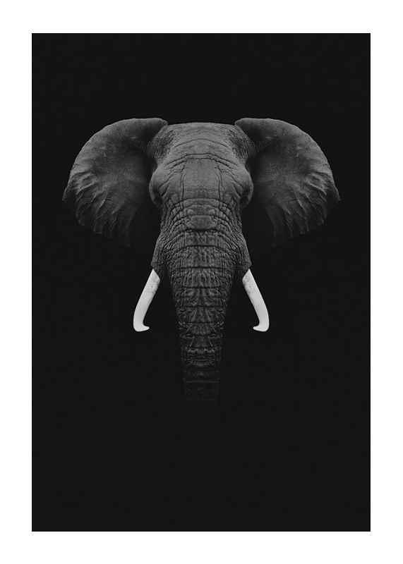 Black Elephant-1