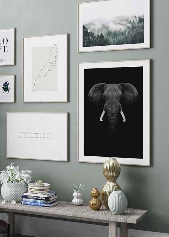 Black Elephant-4