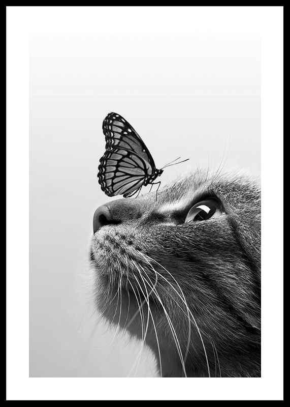 Butterfly Cat-0