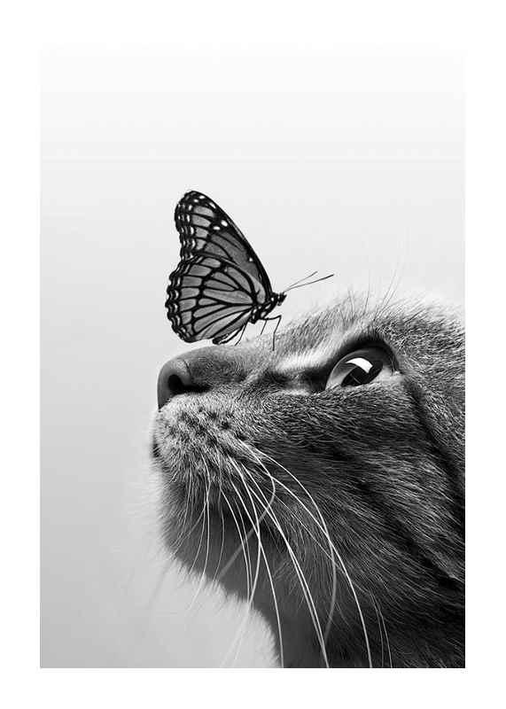 Butterfly Cat-1