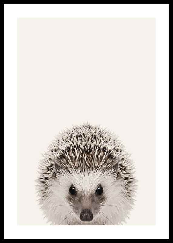 Baby Hedgehog-0
