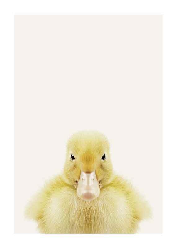 Baby Duck-1