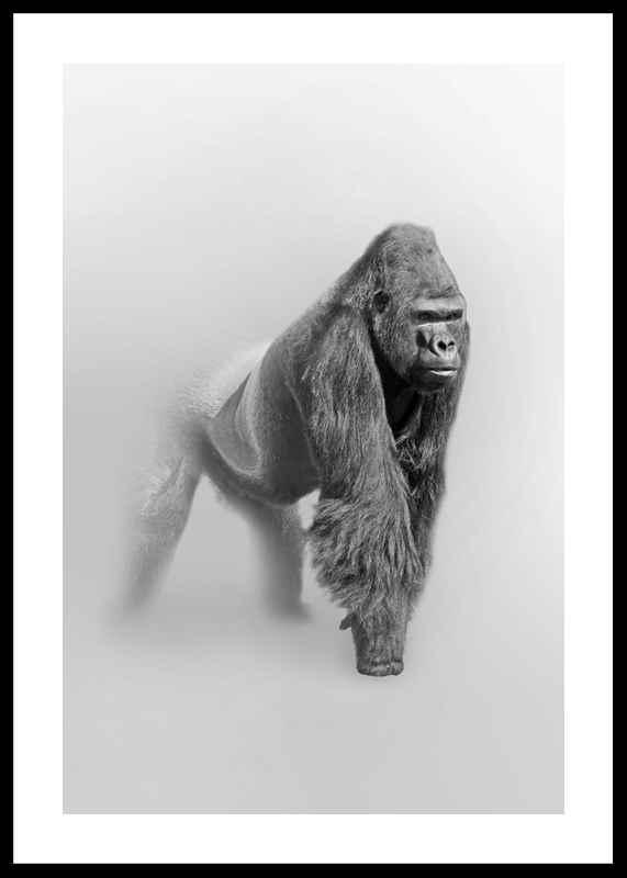 Faded Gorilla -0