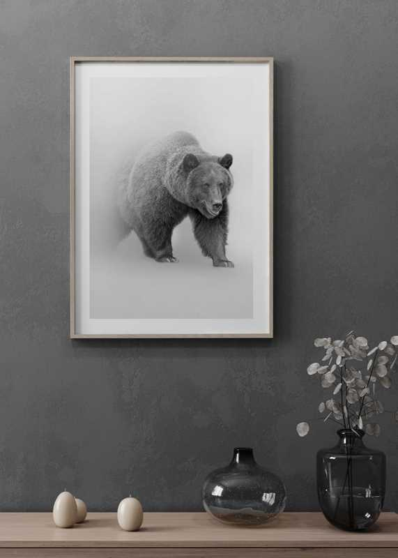 Faded Bear-4