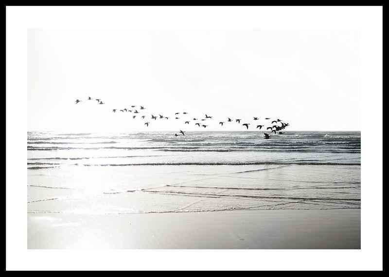 Birds Over Beach