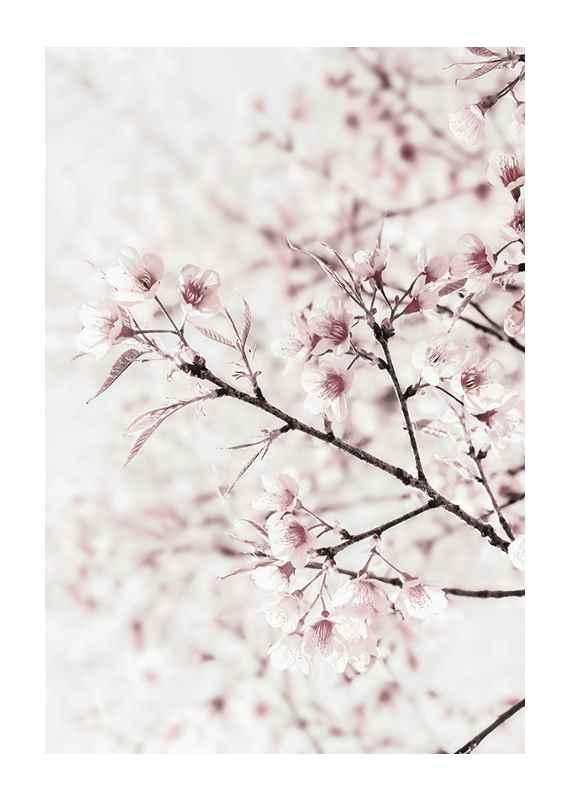 Cherry tree-1