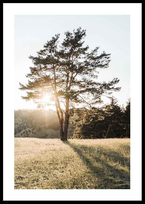 Tree in Sunlight-0