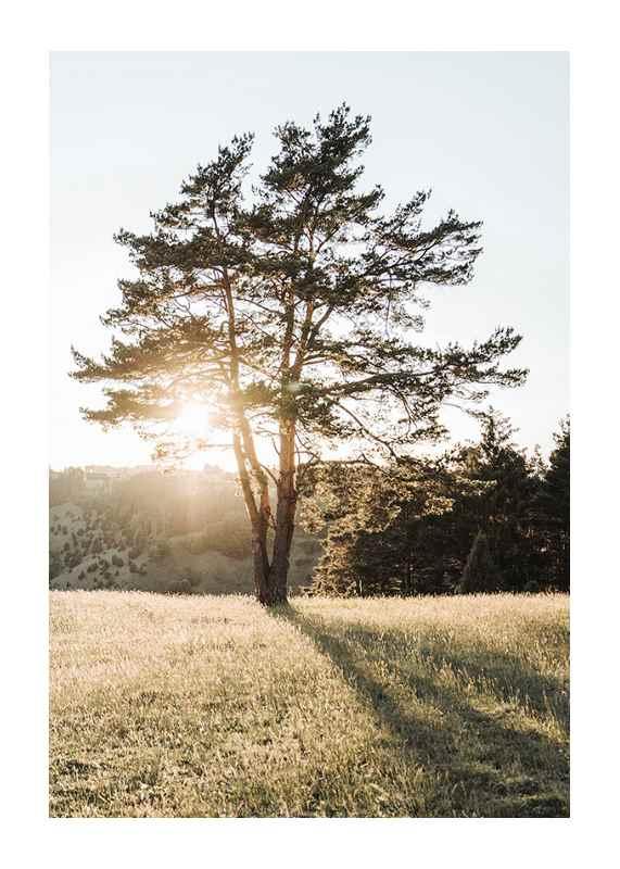 Tree in Sunlight-1