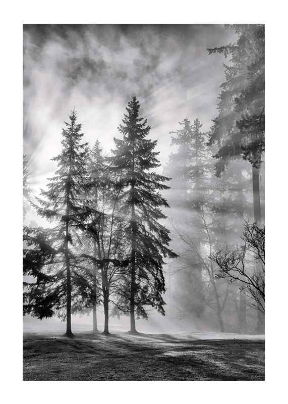 Sunrays Through Trees-1