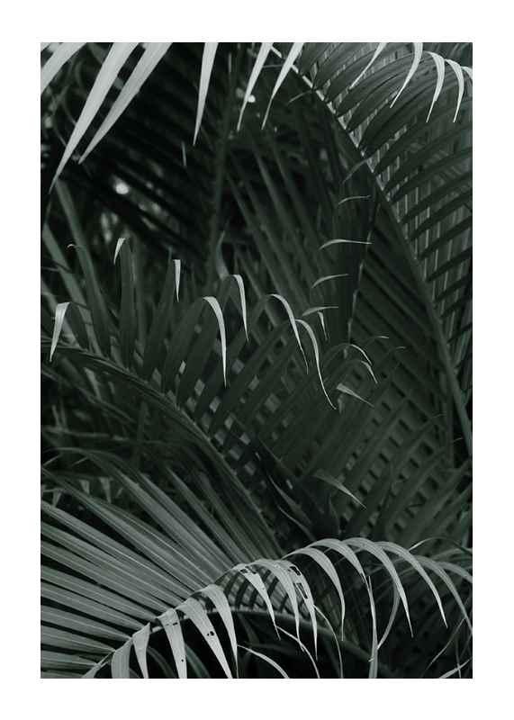 Palm Leaf No1-1