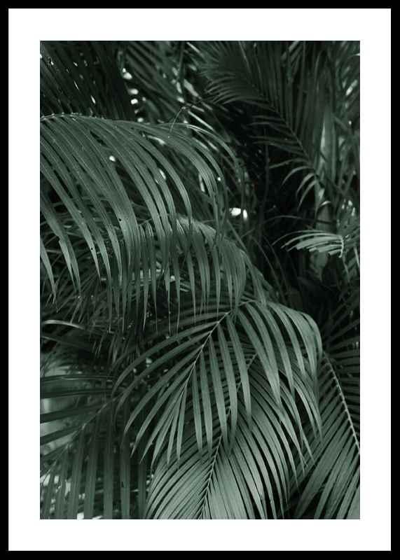 Palm Leaf No2