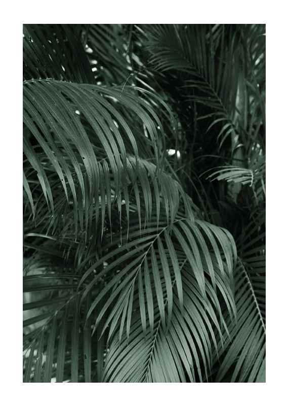 Palm Leaf No2-1