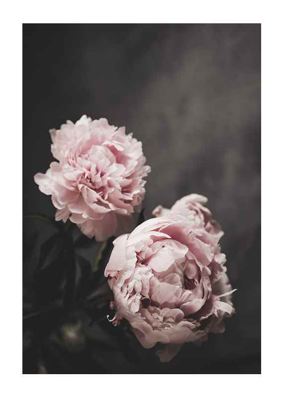 Pink peonies No2-1
