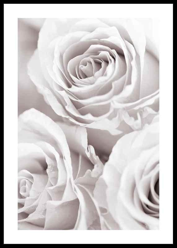 Bright Pink Roses No1-0