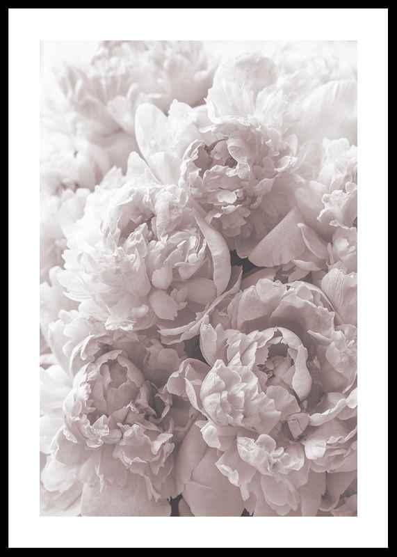 Bright Pink Roses No2-0