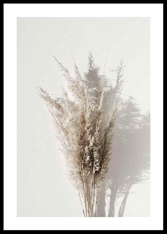 Dry Reeds No1