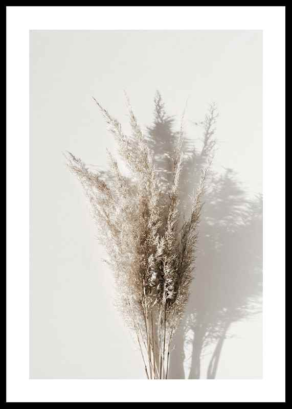 Dry Reeds No1-0