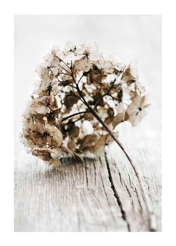 Dried Field Flower No1-1