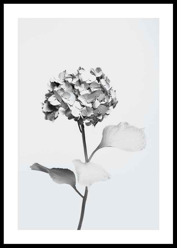 White Painted Flower