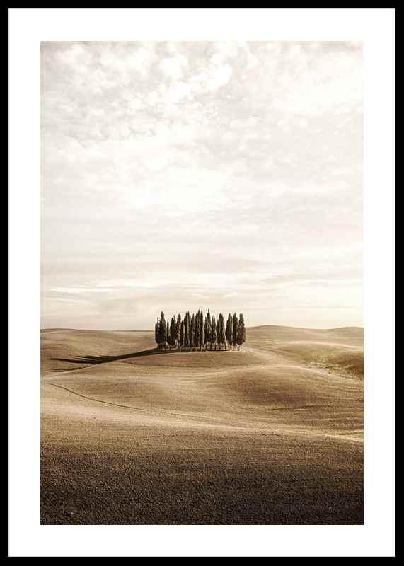 Cypress trees-0