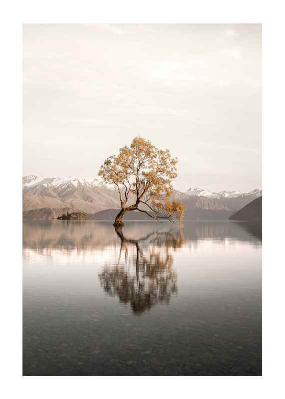 The Lonely Tree-1