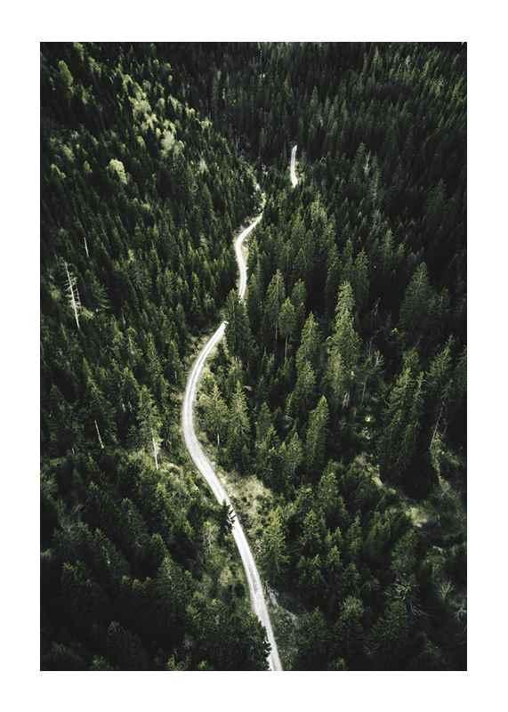 Coniferous Forest-1