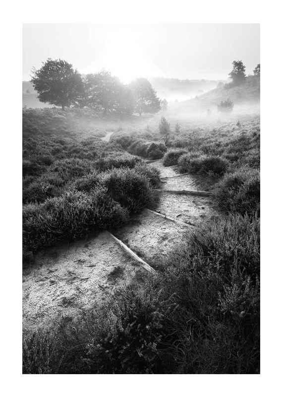 Foggy Road-1